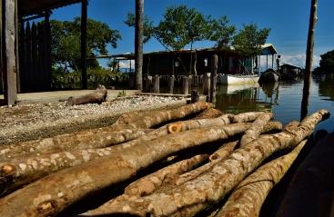 OmarContreras_madera para hacer casa en los palafitos magdalena